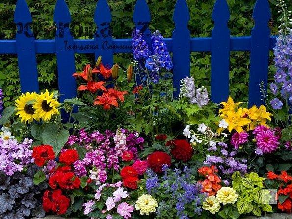 Цветочные насаждения на участке