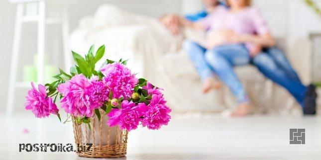 Цветы для дома и квартиры: необходимость и роль