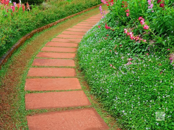 живой садовый бордюр
