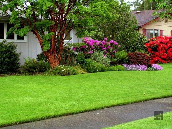 красота современного газона