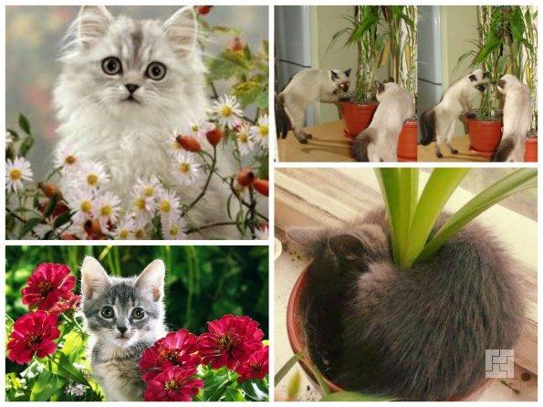 Котята и цветы в доме