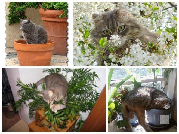 Домашние кошки и растения