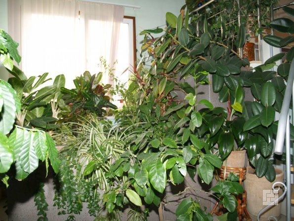 Зеленый уголок в доме