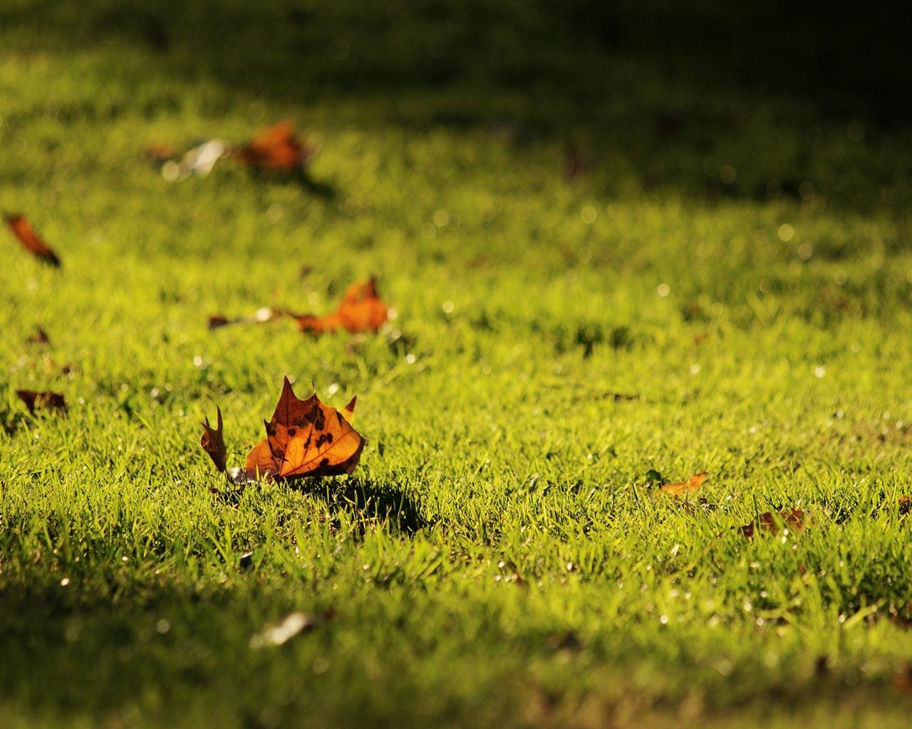 газон осень