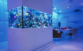 Где оно — лучшее место для аквариума в интерьере?