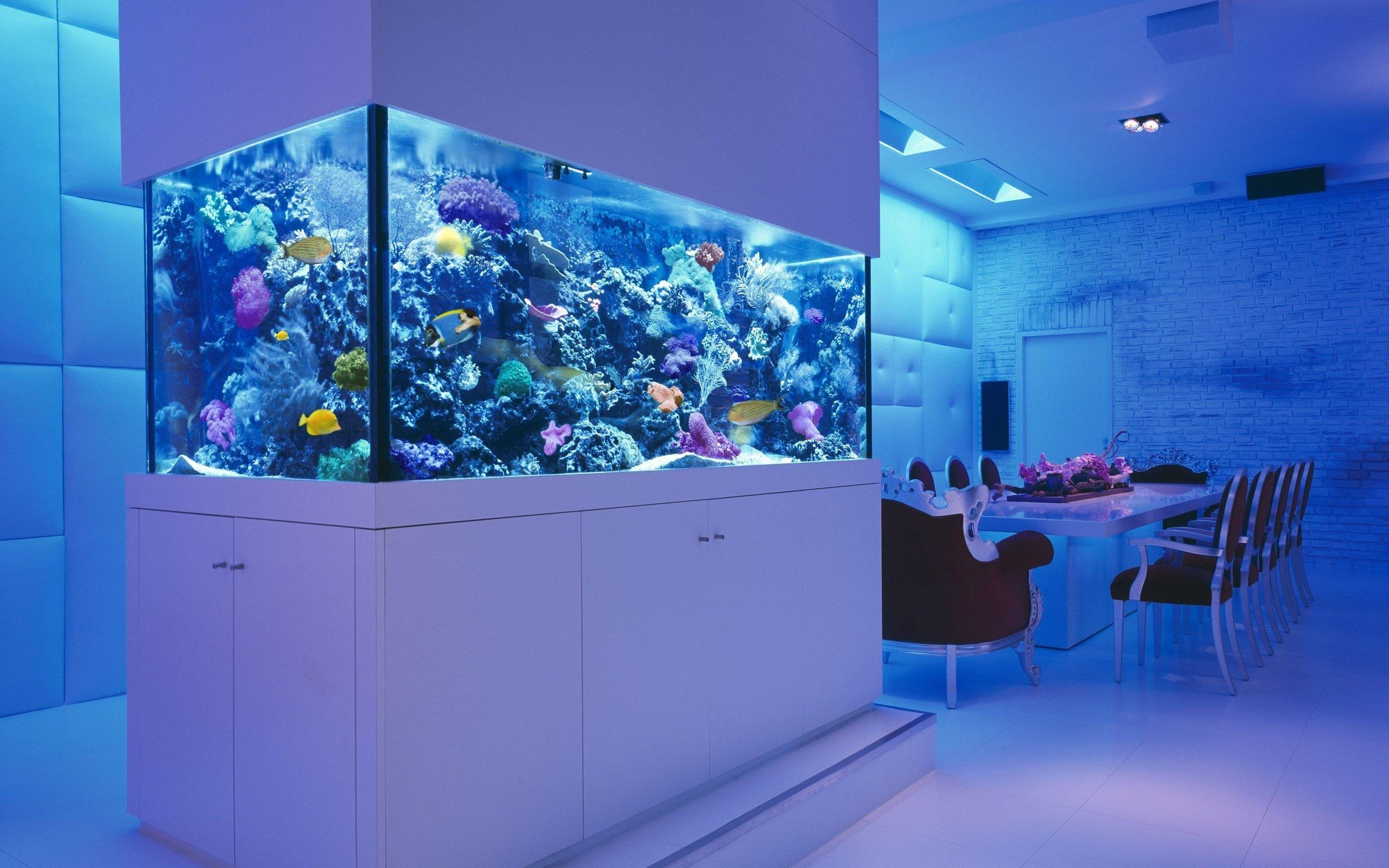 аквариум фото в интерьере фото