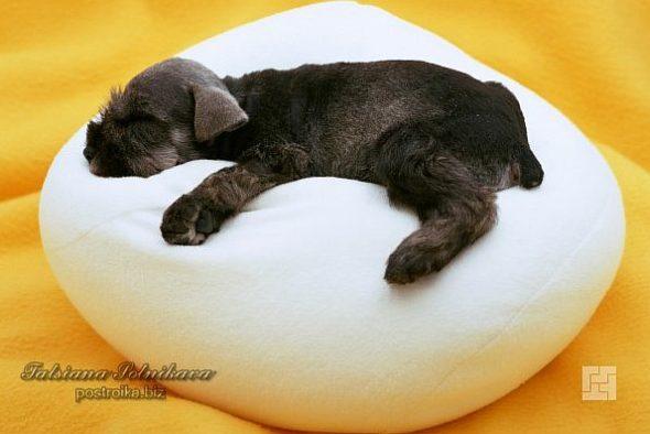 Подушка-лежанка для собаки