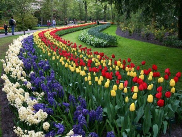 Клумба в парке из разноцветных тюльпанов и флоксов