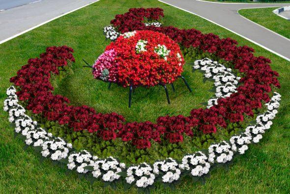 Клумба из красных и белых цветов с фигурой божьей коровки