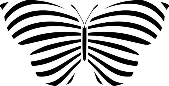 Большая чёрно-белая бабочка