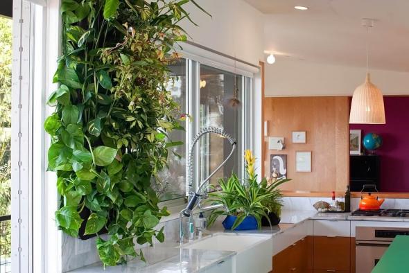 Вертикальный сад над кухонной столешницей