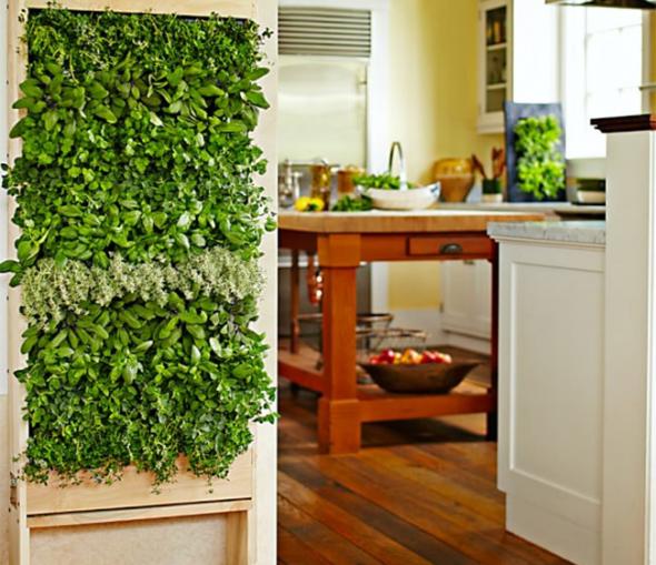 Вертикальный сад возле кухни