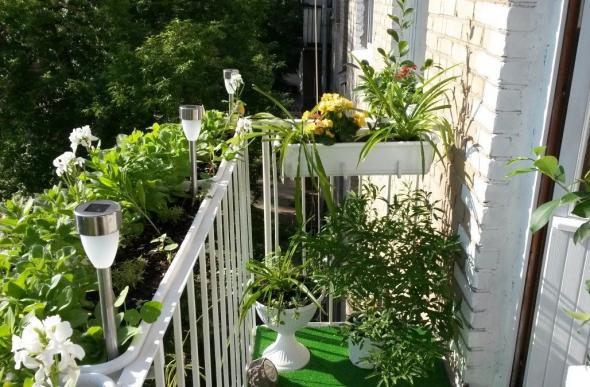Использование балкона для создания висячих садов