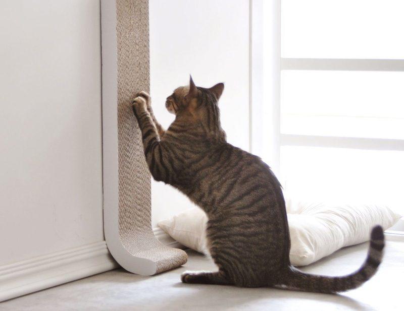 Как защитить стены от когтей кошек: обзор лучших антивандальных покрытий