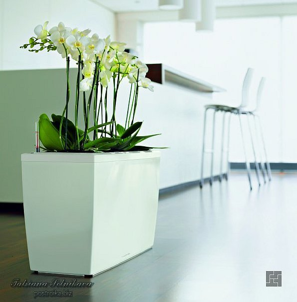 Значение цветов и растений в интерьере дома