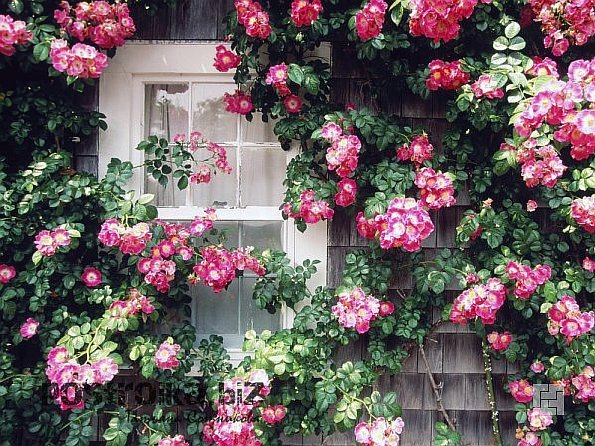 Украшение участка цветниками