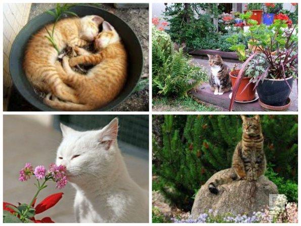 Цветы в доме и кошки