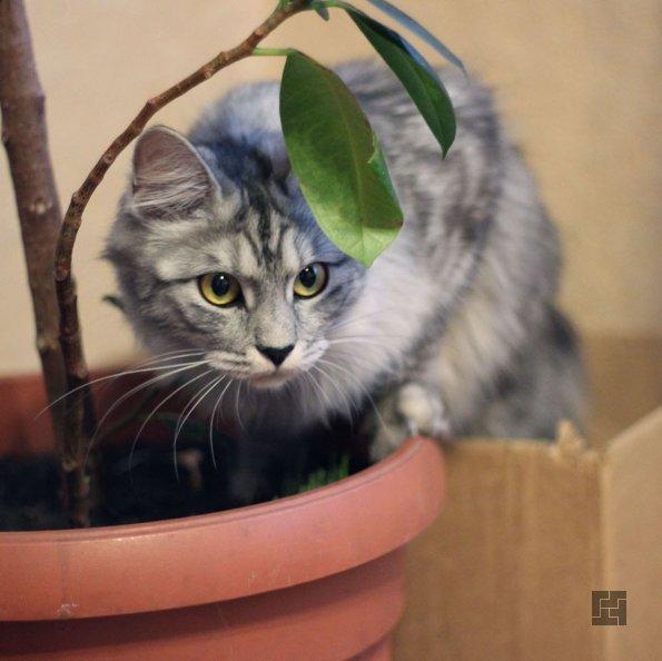 Кот в вазоне