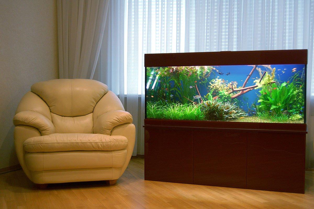 Аквариум в интерьере квартиры — современный стиль экодизайна