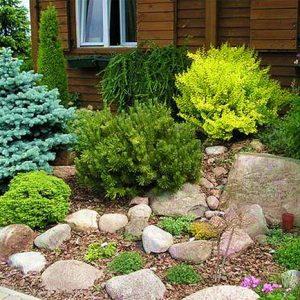 Хвойный альпинарий в саду