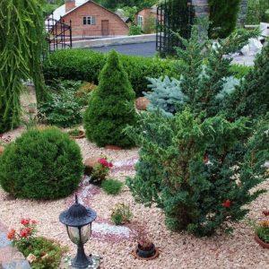 Сад из хвойных растений