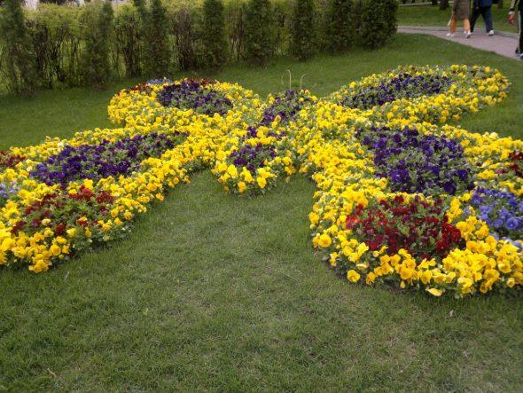 Клумба из желтых, синих и красных цветов в виде бабочки