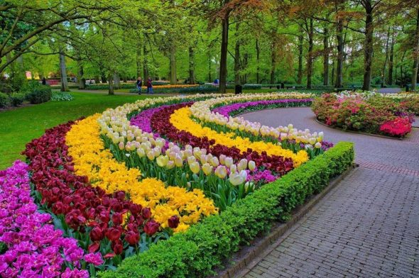 Клумба из разноцветных тюльпанов в парке