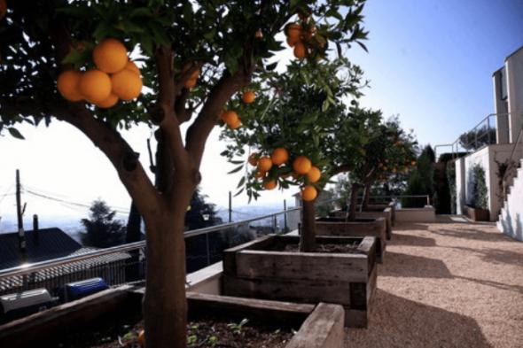 Двор с апельсиновыми деревьями