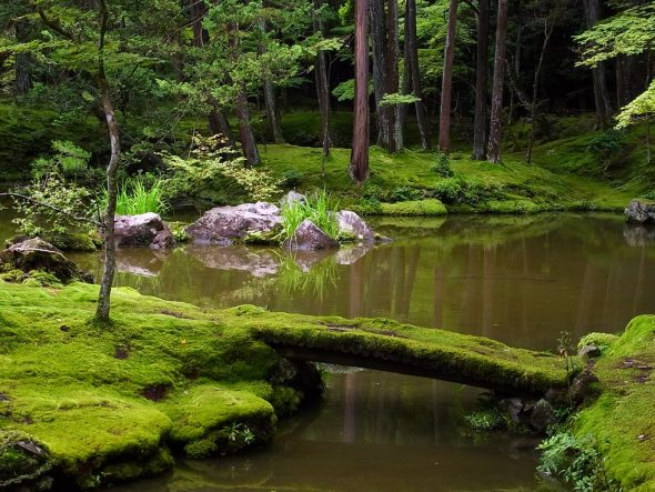 Необычный парк с водоемом