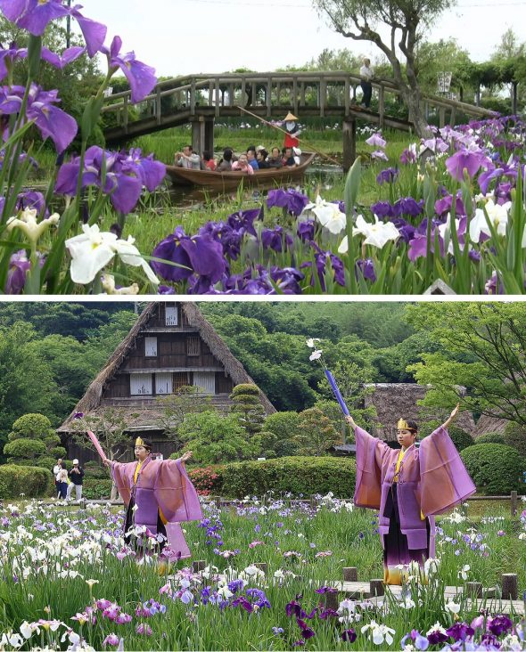 Цветущий сад в Японии