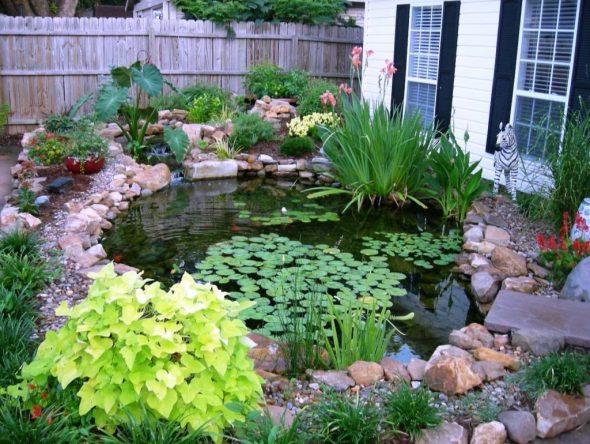 Дачный пруд с плавающими растениями
