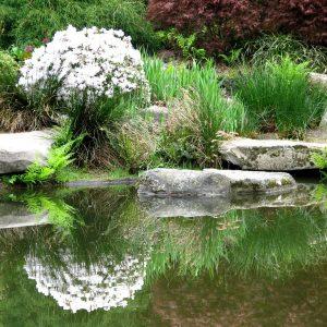 Дачный пруд с растениями вокруг