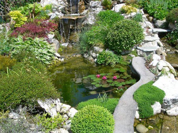 Декоративный пруд с растениями