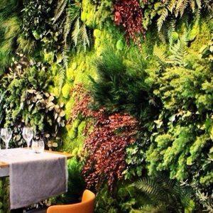 Вертикальное озеленение в помещении