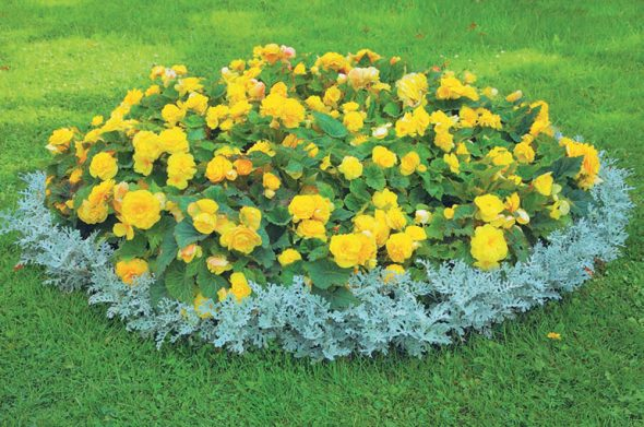 Клумба с желтыми цветами