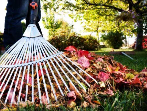 Уборка опавших листьев всаду