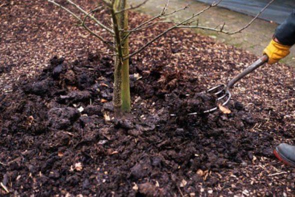 Рыхление почвы вокруг дерева