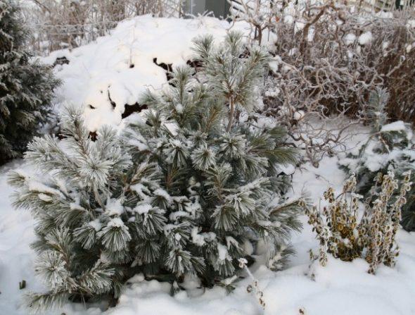 Растения в снегу