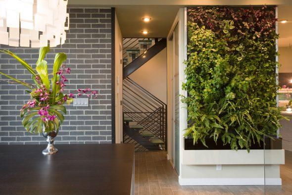 Вертикальный сад в помещении