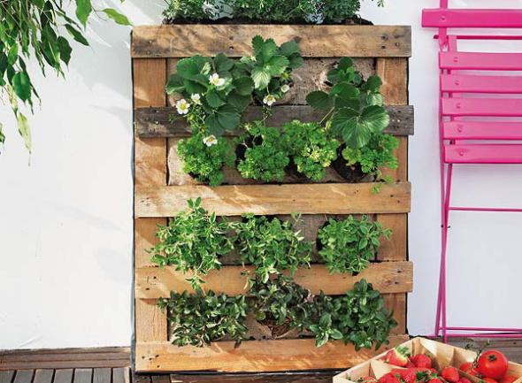 Вертикальный огород в квартире
