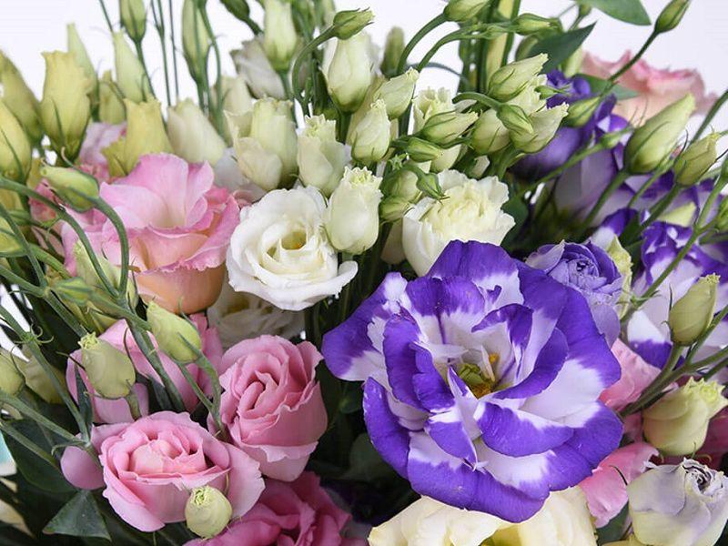 Красивые цветы для самых любимых на 8 Марта