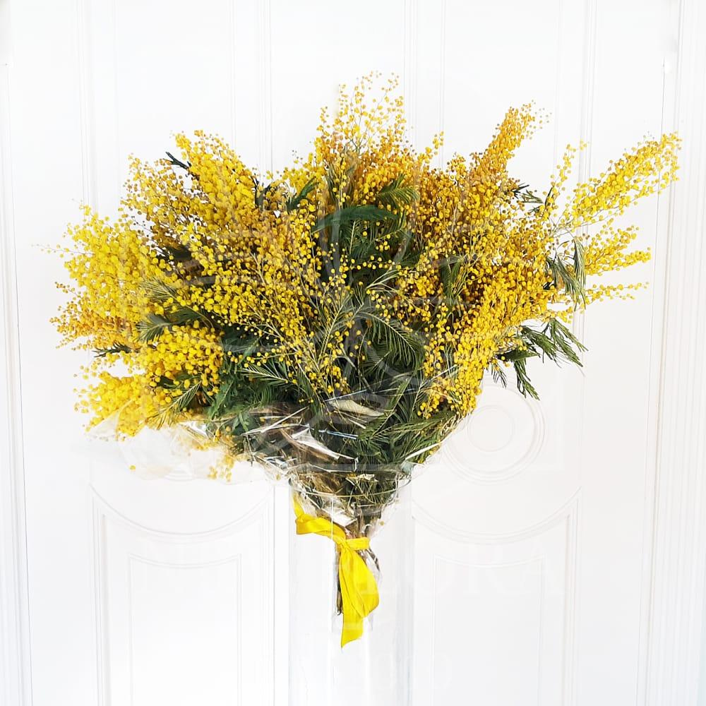Цветы мимозы букеты из мимоз