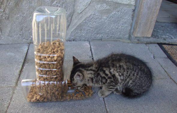 Кормушка для кошки из пластиковой бутылки