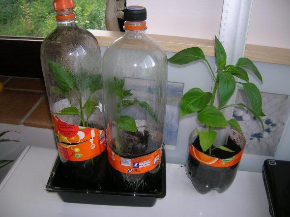Мини-теплица из пластиковой бутылки для растений