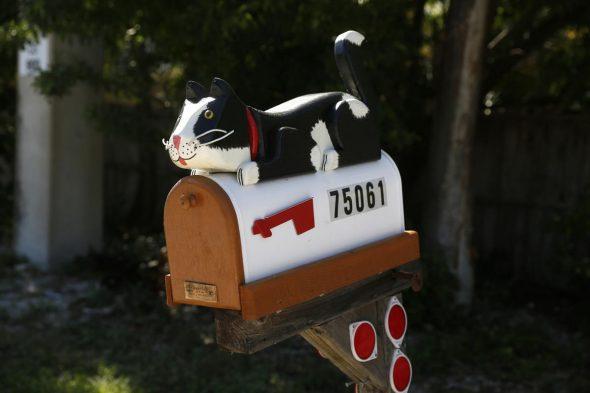 Почта с котёнком