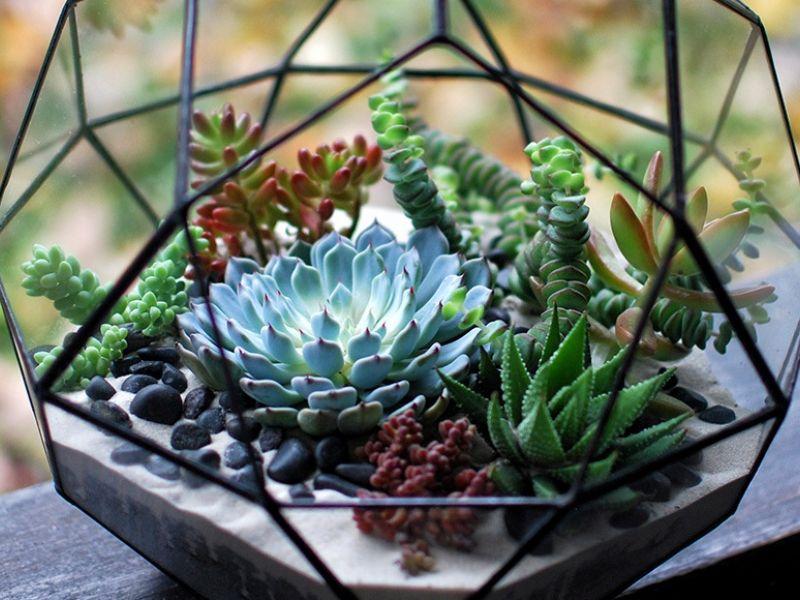 Суккуленты для дома: топ-10 лучших растений с фото