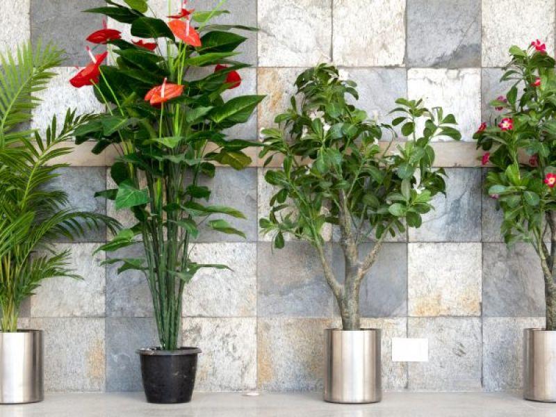 Главные причины, зачем нужны комнатные растения в доме