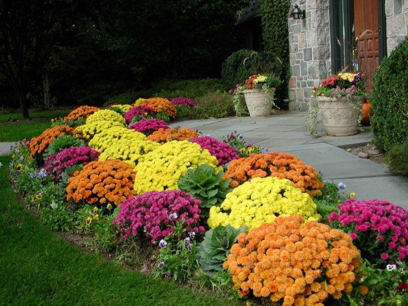 Какие цветы цветут всё лето на улице