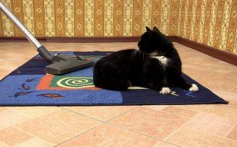 Как убрать шерсть животных в квартире