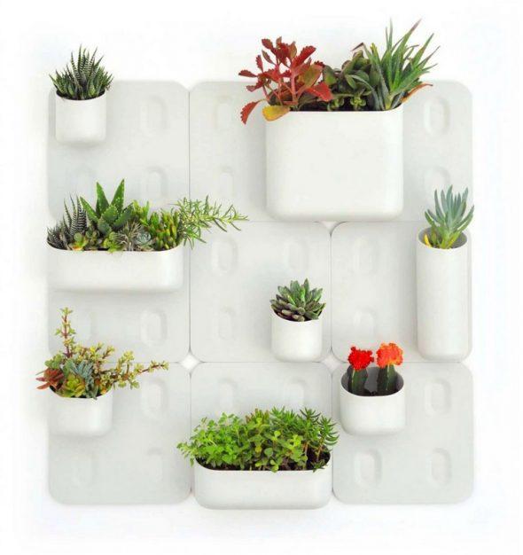 оформление белой стены растениями